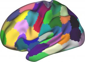 dHCP brain